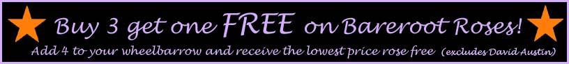 buy-3-get-one-free4.jpg
